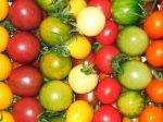 Tomaten - Rot - Gelb - Grün. Es gibt sie alle und….