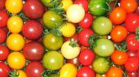 Tomaten rot gelb