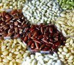 Die Reispflanze im Wandel - Toll oder gefährlich