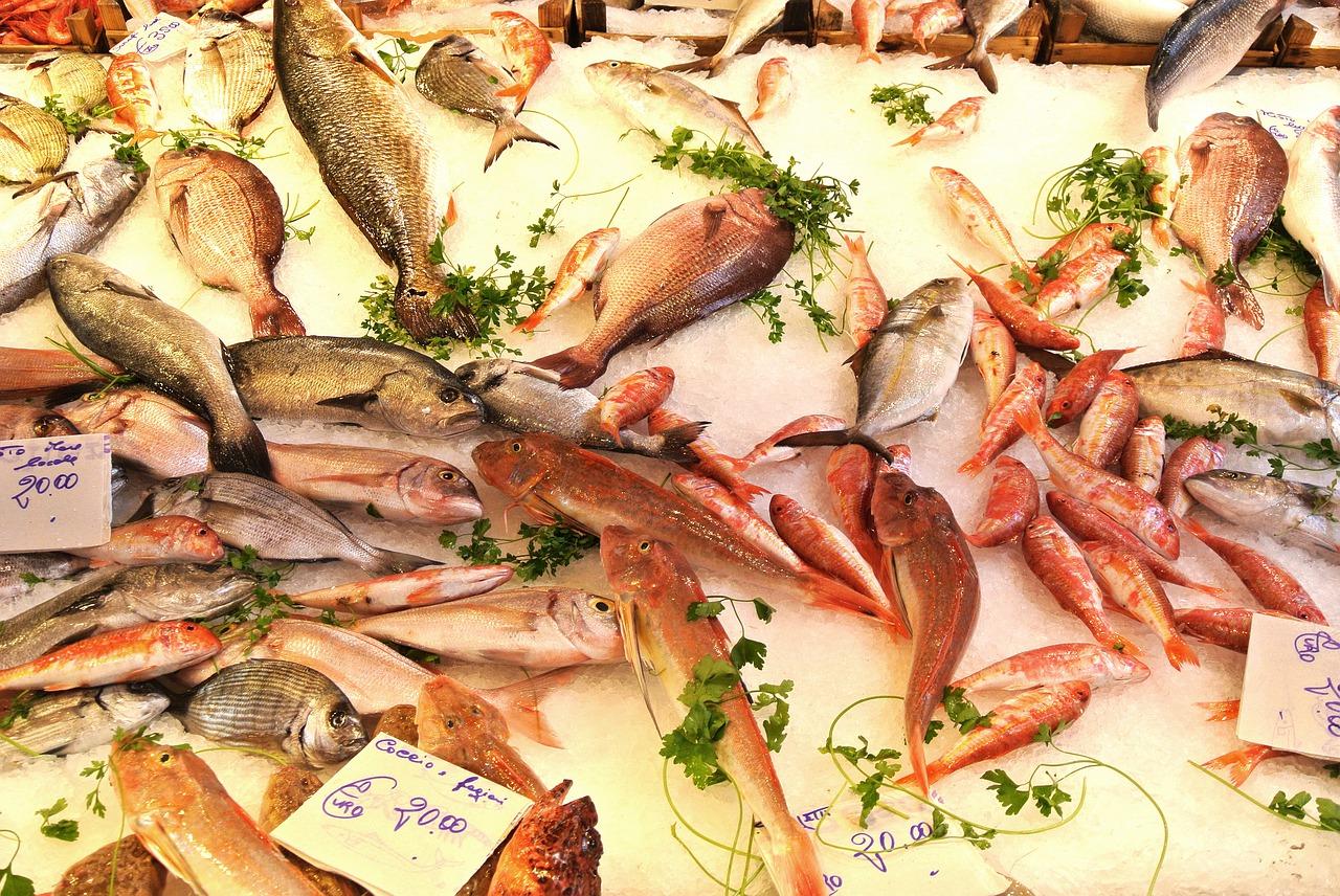 Fisch Übersicht