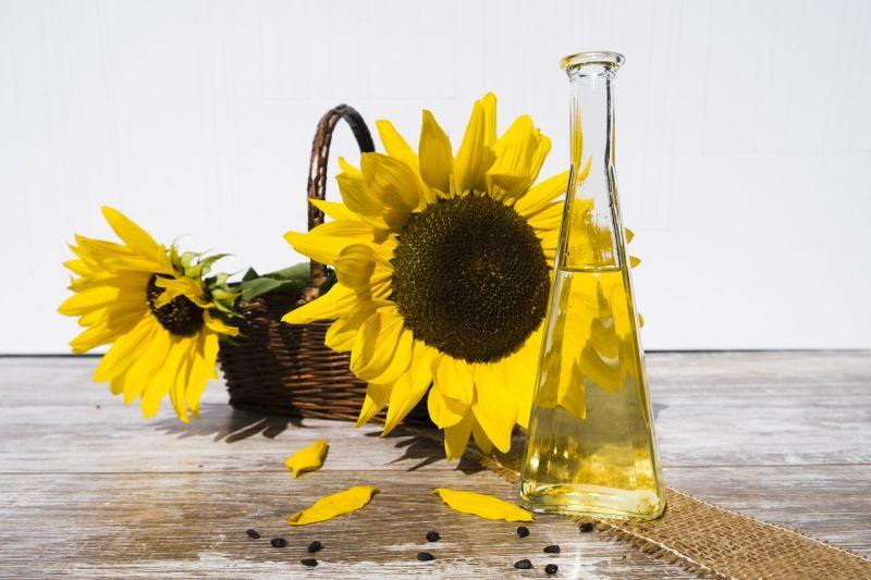 Rapsöl oder Sonnenblumenöl